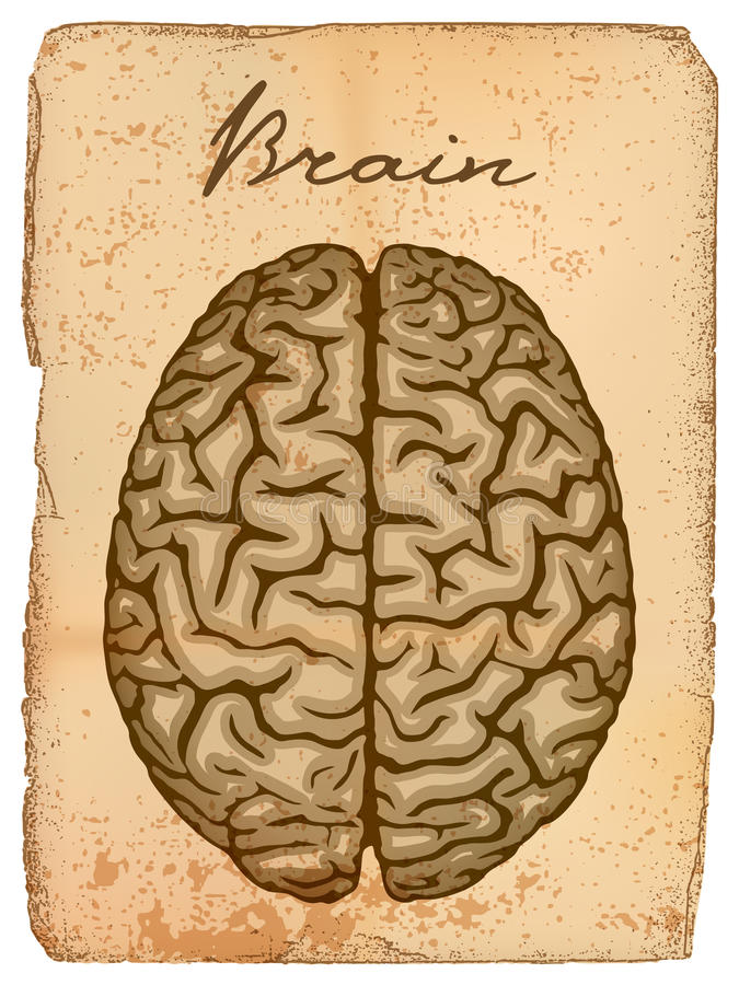 Human brain, old manuscript. vector illustration