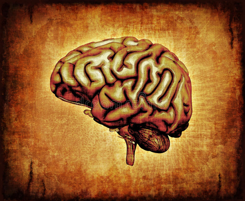 Download Human Brain on Parchment stock illustration. Image of consciousness - 23759407