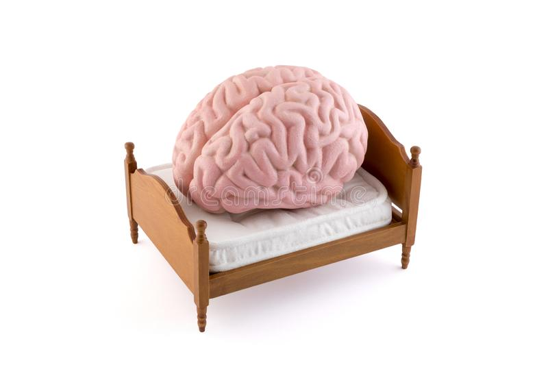 Human brain resting on the bed. Over white background royalty free stock images