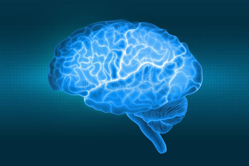 Human brain is a side view in X-rays. Parts of the brain. 3d illustration in blue light on a dark background vector illustration