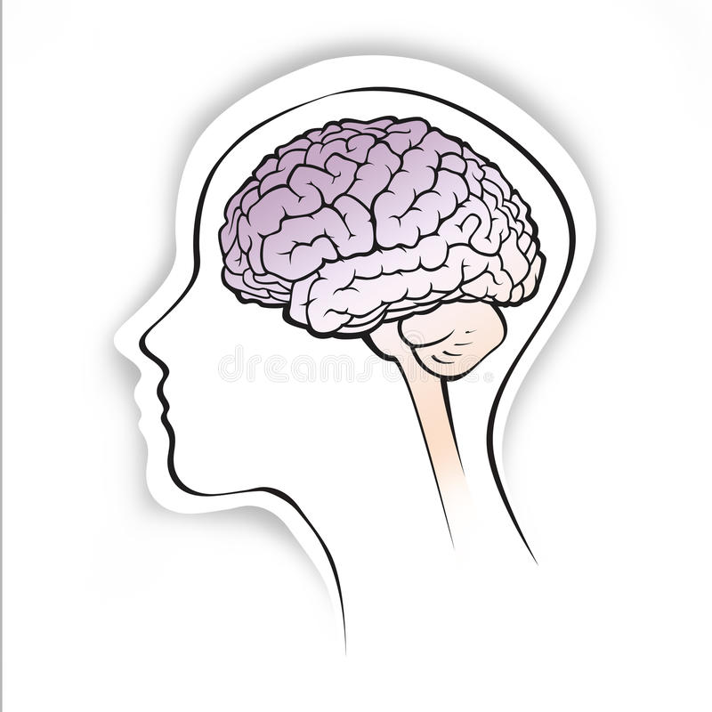 Human Brain Within A Simple Head Silhouette Stock Illustration ...