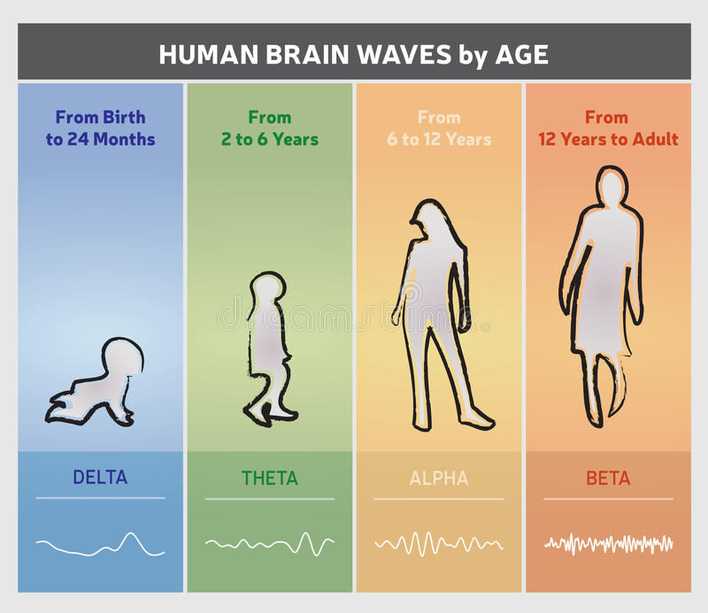 Human Brain Waves by Age Chart Diagram - People Silhouettes. 4 Stages stock illustration