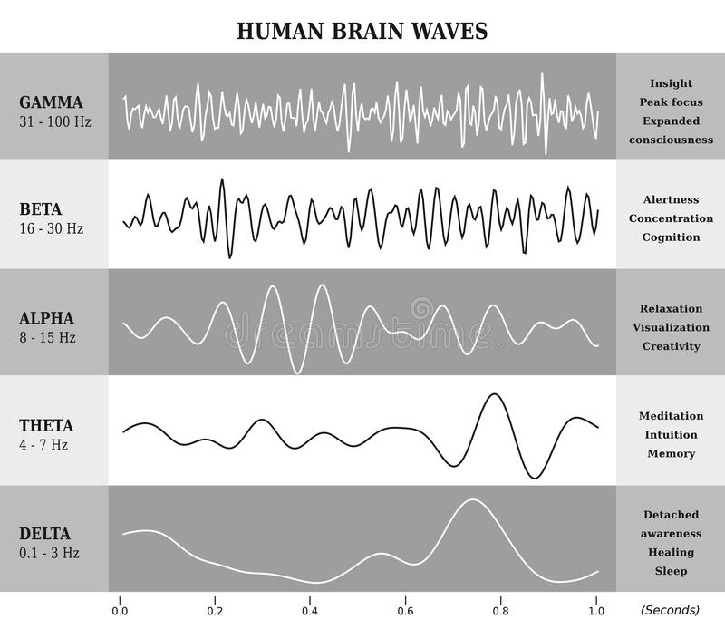 Human Brain Waves Diagram / Chart / Illustration. In Black and White royalty free illustration