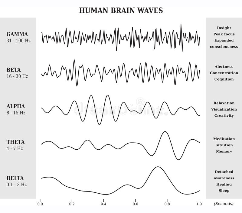 Human Brain Waves Diagram / Chart / Illustration. In Black and White vector illustration