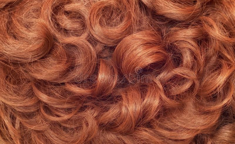 Human curly hair. Close-up of a human curly hair royalty free stock image