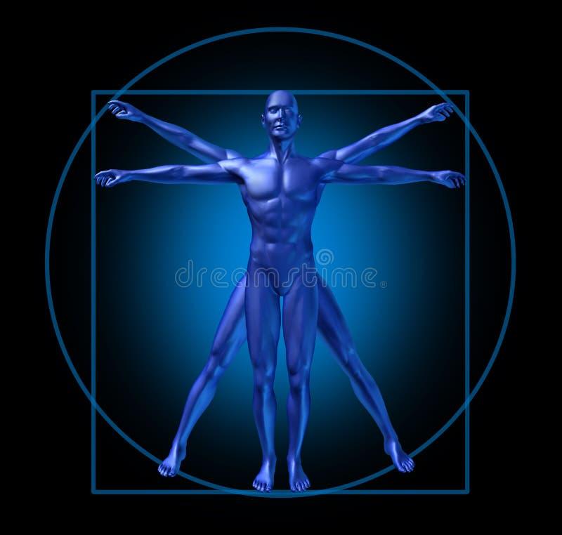 Human diagram vitruvian man royalty free illustration