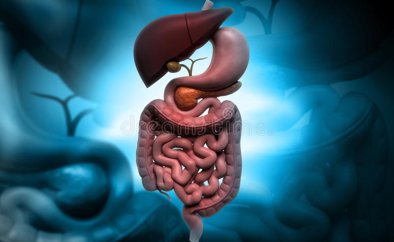 Human digestive system stock image image of schematic 36195533 download human digestive system stock image image of schematic 36195533 ccuart Image collections