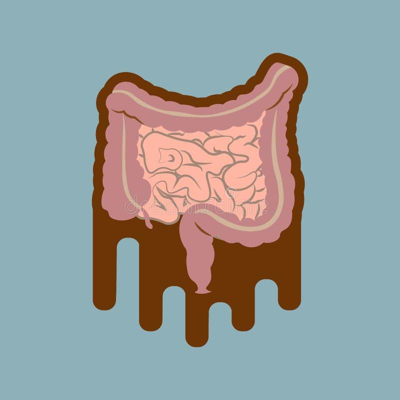 Human digestive system intestines gut anatomy gastrointestinal tract diagram. Meteorism, Enteritis, Colitis, Ulcerative Colitis, D. Ysbacteriosis, Diarrhea vector illustration