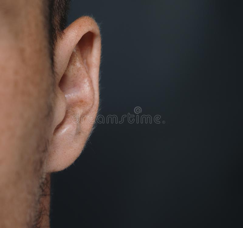 Human ear detail close-up macro shot royalty free stock image