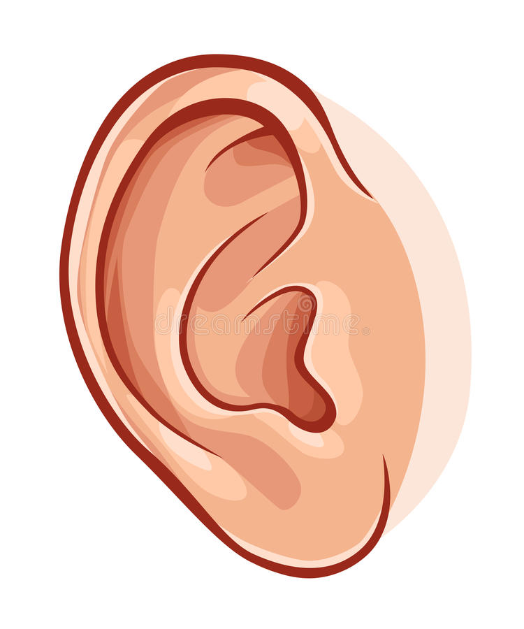 Human ear. Illustration of realistic human ear isolated on white