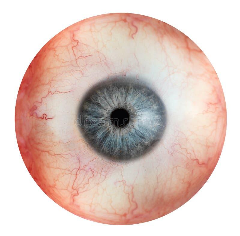 Human eye stock photos