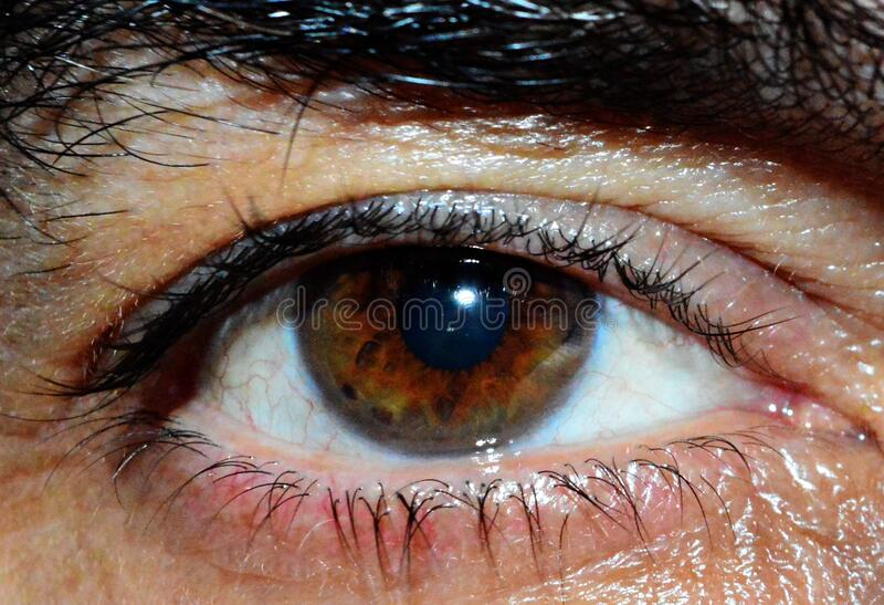 Human Eye Free Public Domain Cc0 Image