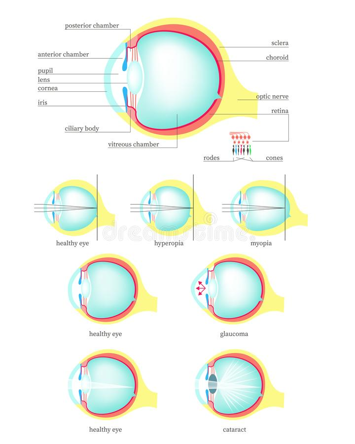 Human eye anatomy, vector flat isolated illustration royalty free illustration