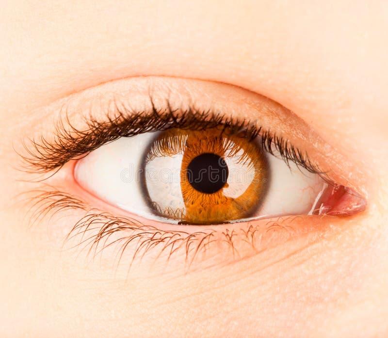 Human eye close up . royalty free stock image