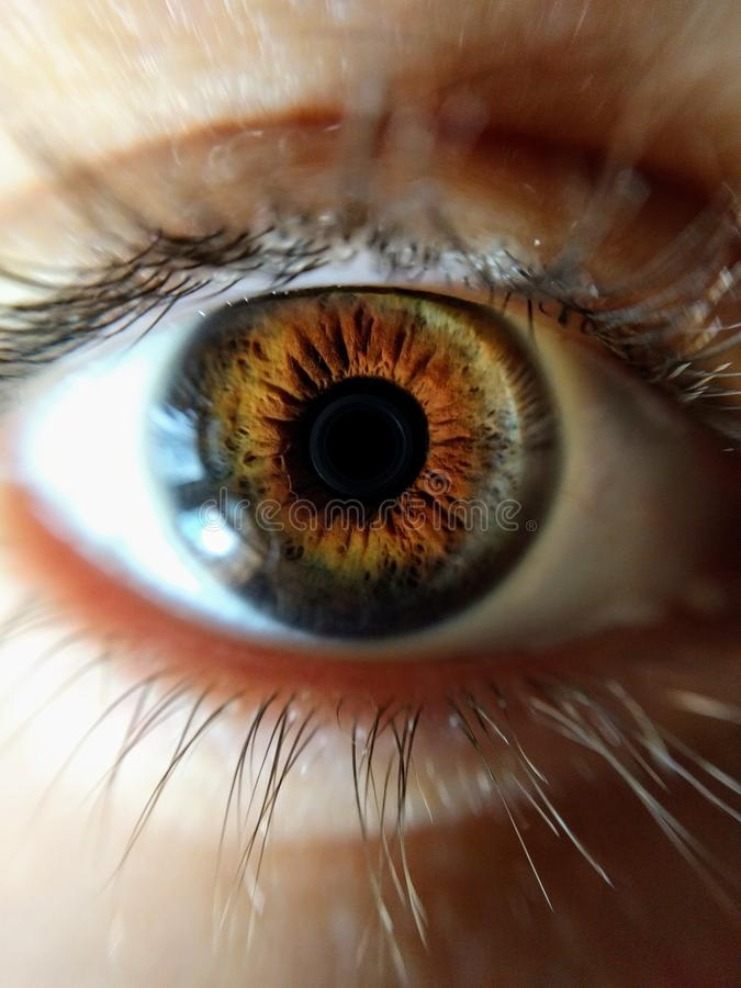 Human Eye Closeup Photo stock images