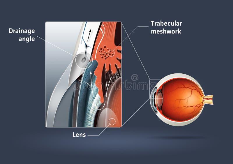 Human eye - glaucoma. High quality raster illustration of glaucoma (eye disease stock illustration