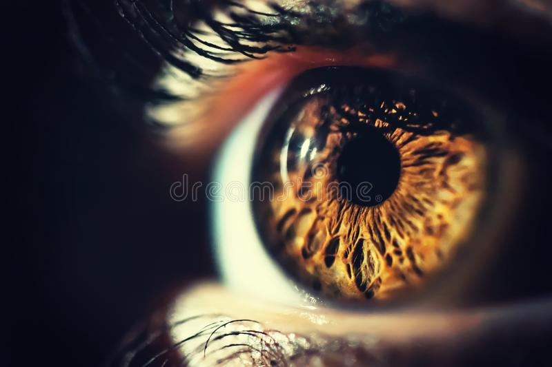 Human eye macro shot. Brown human eye iris macro shot. Brightly lit. Horizontal image royalty free stock images