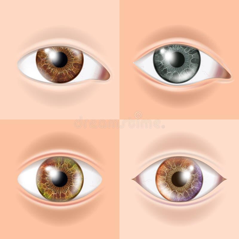 Human Eye Set Vector. Vision Concept. Medical Eye Diagnostic. Sight, Eyesight. Organ Test. Body Care. Realistic Detail. Human Eye Set Vector. Vision Concept stock illustration