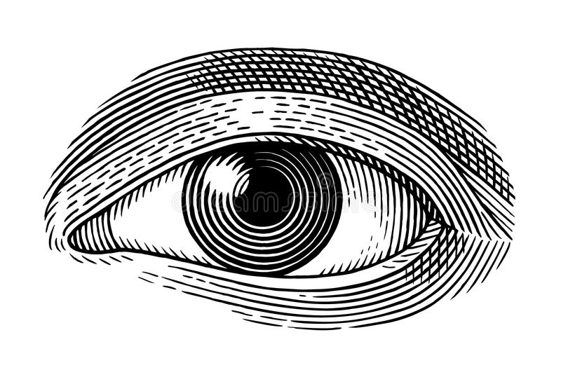 Human eye. Vector illustration of human eye in engraved style