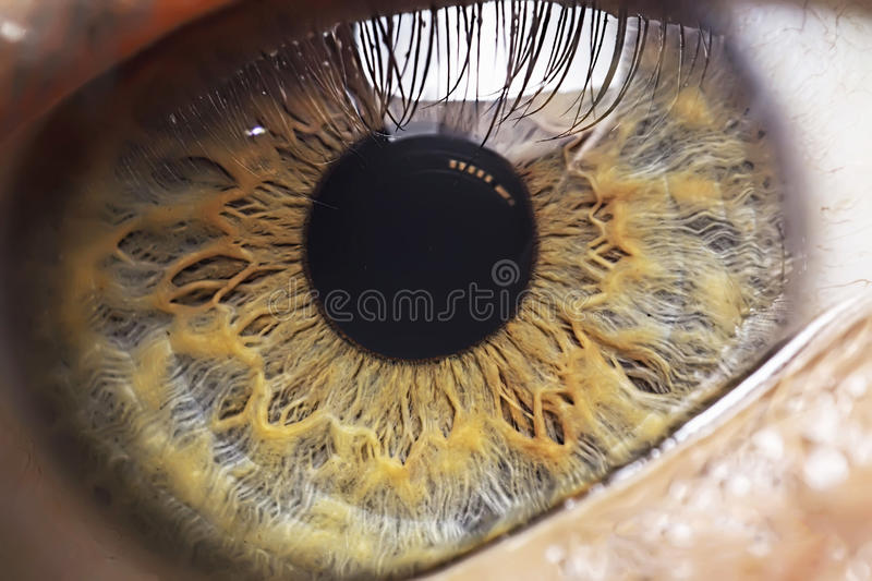 Human Eye. A human eye was captured very closely you can see the nerves too stock image