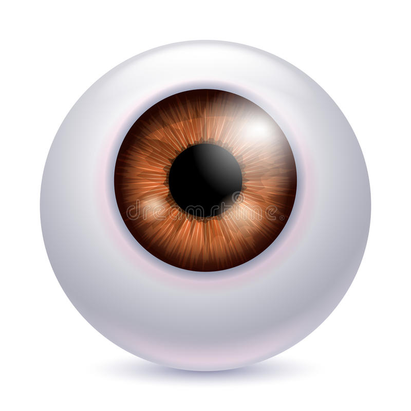 Human eyeball iris pupil - brown color. Human eyeball iris pupil isolated on white background - Brown color. Brown eye realistic vector illustration vector illustration