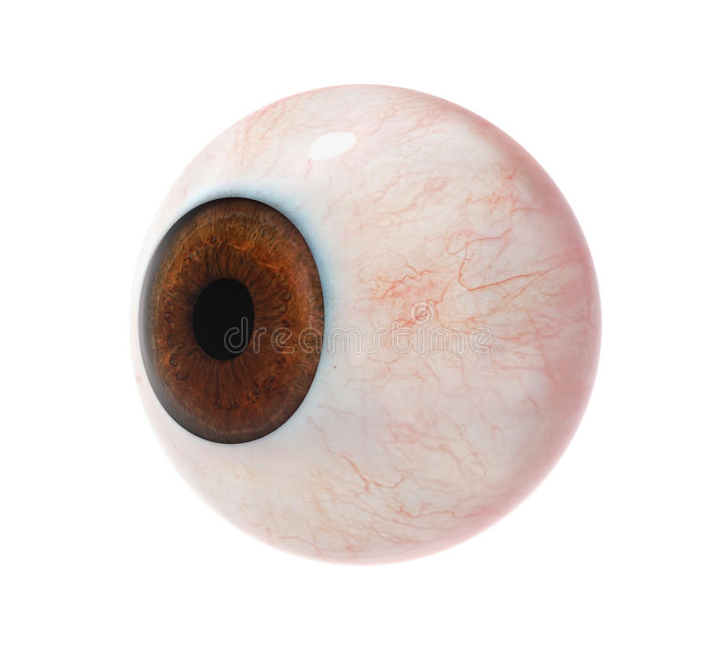 Human Eyeball. On white background. 3D render royalty free illustration