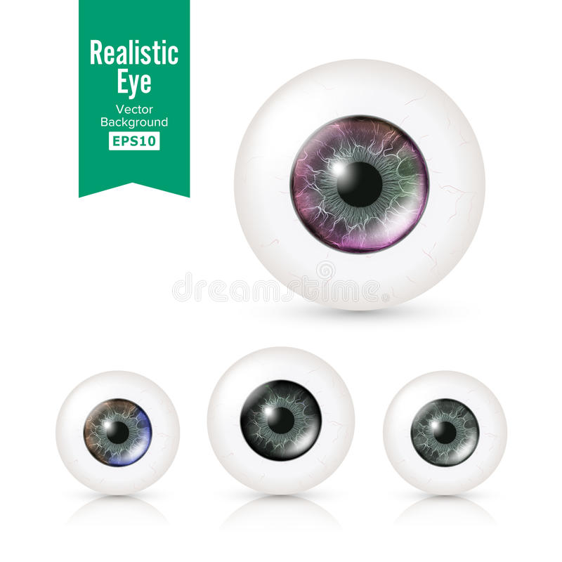 Human Eyeballs Set With Big Irises In Colour. Vector Illustration Of 3d Glossy Detailed Eye With Shadow And Reflection. Cornea. Front View. Isolated On White royalty free illustration