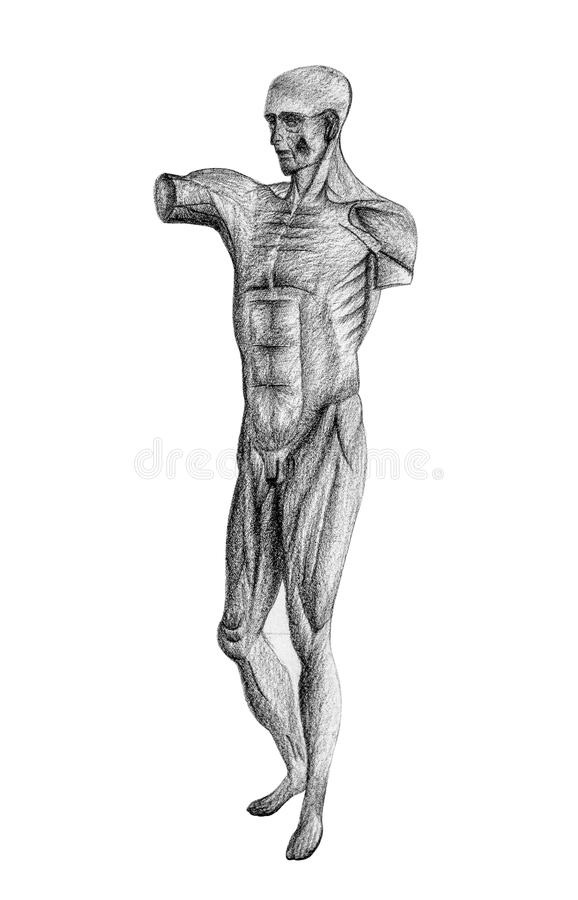 Human figure drawing from 45 angle royalty free stock image