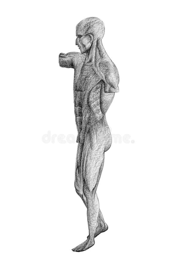 Human figure drawing from side view isolated stock image