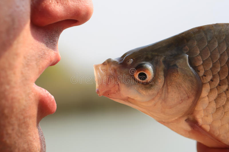 Human and fish head. Closeup view of human male face and fresh fish head with open mouth looking at each other in funny dialogue sunny day outdoor on natural royalty free stock photos