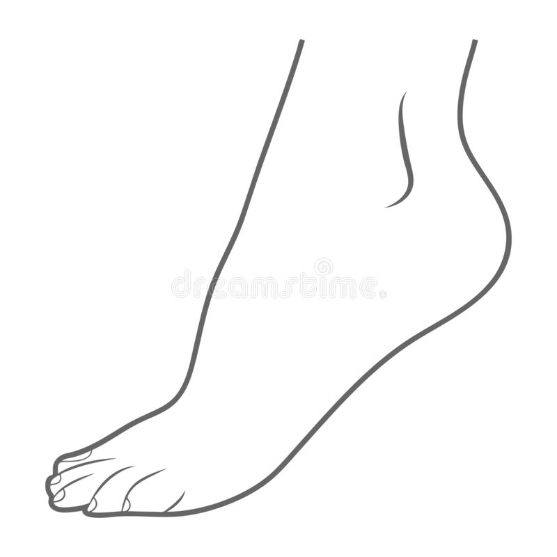 Human Foot, Leg Icon - Lateral View Outside Isolated On A White Background. Vector Illustration. Orthopedics, Organs Concept stock illustration