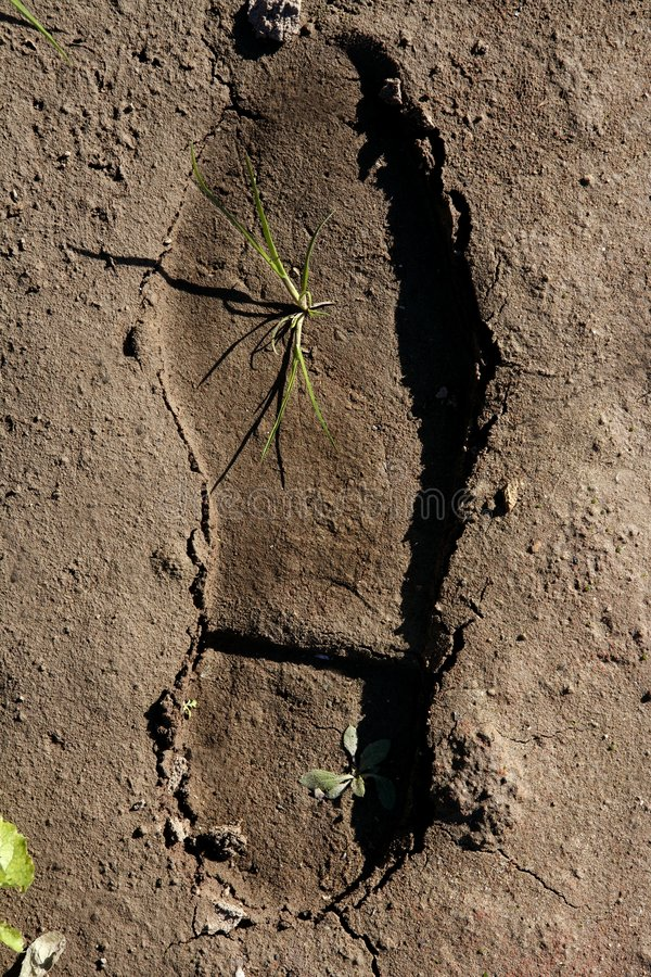 Download Human Footprint In A Clay Floor, Plant Growing Stock Photo - Image: 7531722