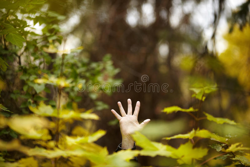 Human friendly for nature royalty free stock images