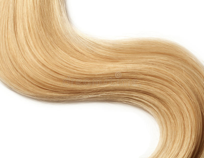 Human hair. Long blond human hair isolated on white background. hair color swatch royalty free stock photo