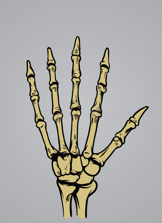 Human hand bone. Vector of human hand bone vector illustration