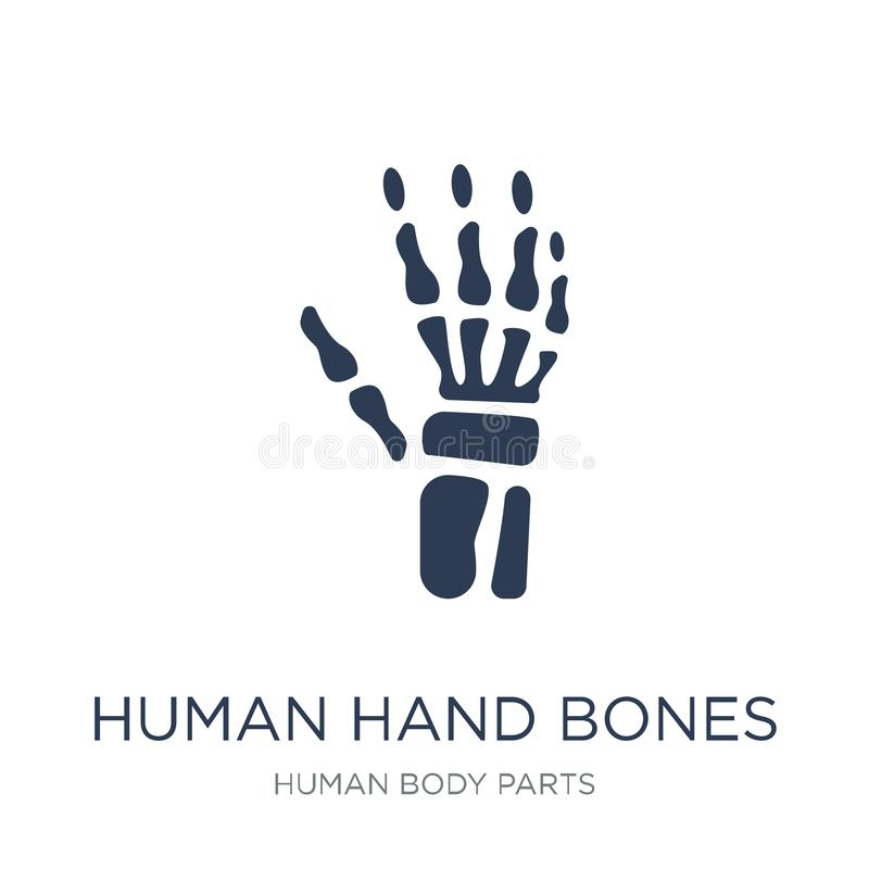 Human hand bones icon. Trendy flat vector Human hand bones icon stock illustration