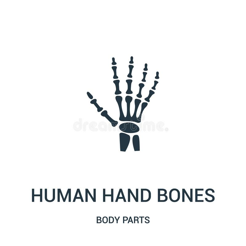 human hand bones icon vector from body parts collection. Thin line human hand bones outline icon vector illustration stock illustration
