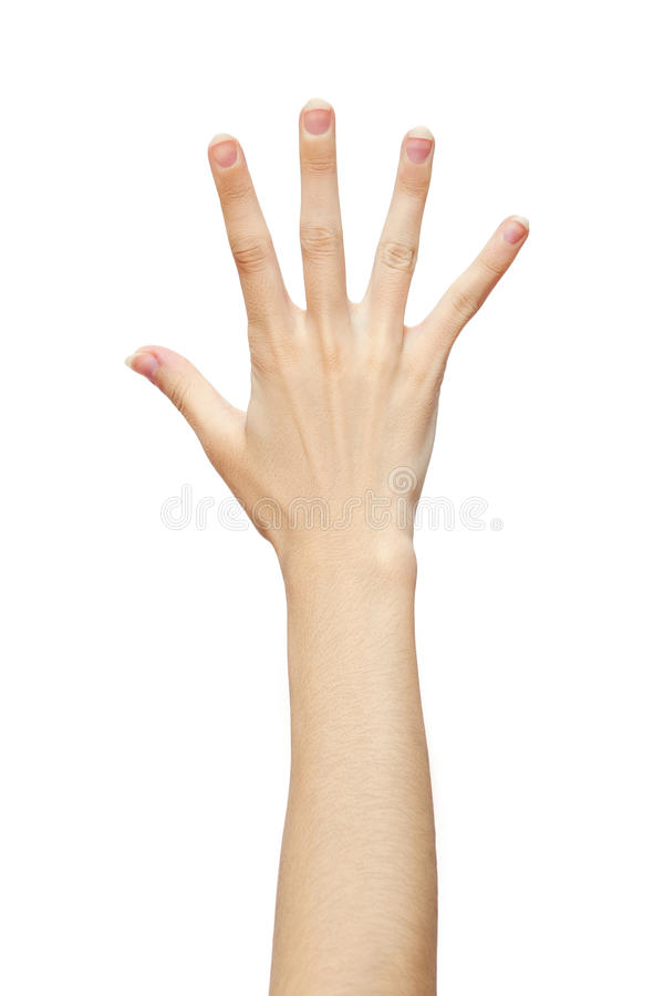 Human hand five fingers isolated on white background. Studio photo stock images