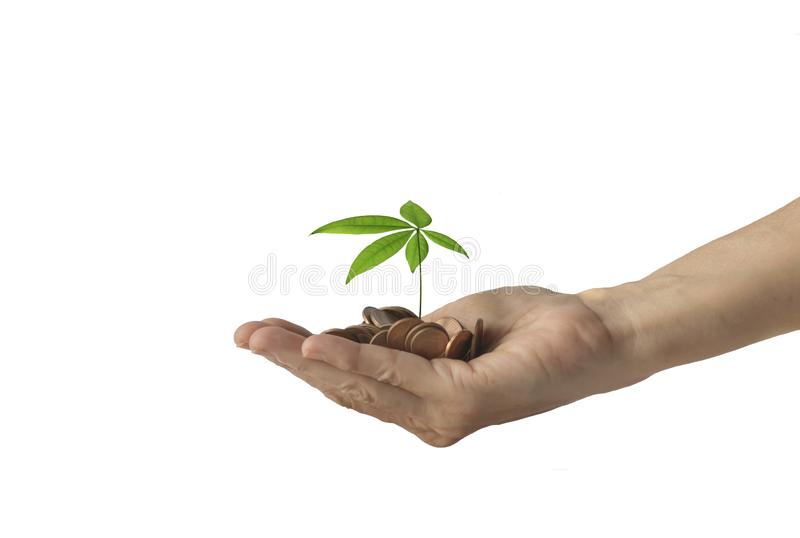 Human hand with heap of money and a small tree on top stock photos