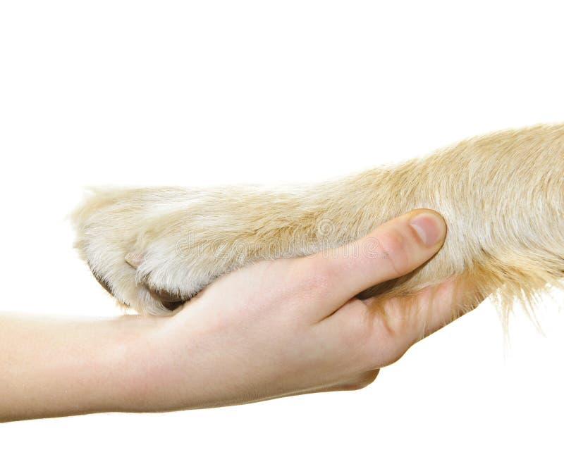Human hand holding dog paw. Isolated on white background stock photos