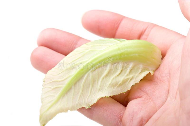 Download Human Hand Holding A Green Leaf Isolated Stock Image - Image: 12927425