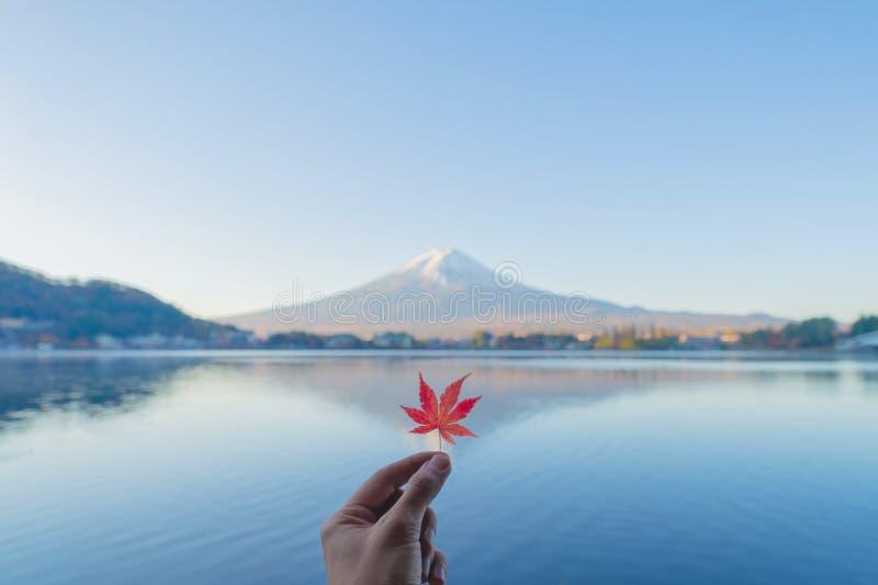 Human hand holding a red maple leave with mountain Fuji. Fall foliage in colorful autumn season near Fujikawaguchiko, Yamanashi. stock images