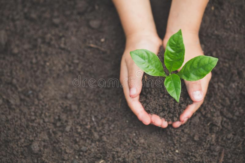 Human hand holding a small seedling, plant a tree, reduce global warming, World Environment Day.  royalty free stock photos