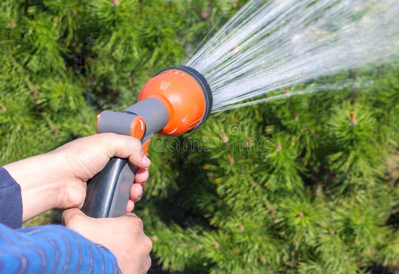 Human hand holding water sprinkler and watering green garden royalty free stock image