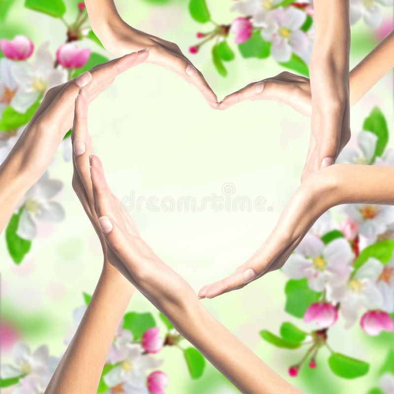 Human hands in heart shape over bright spring blossom. Background stock image