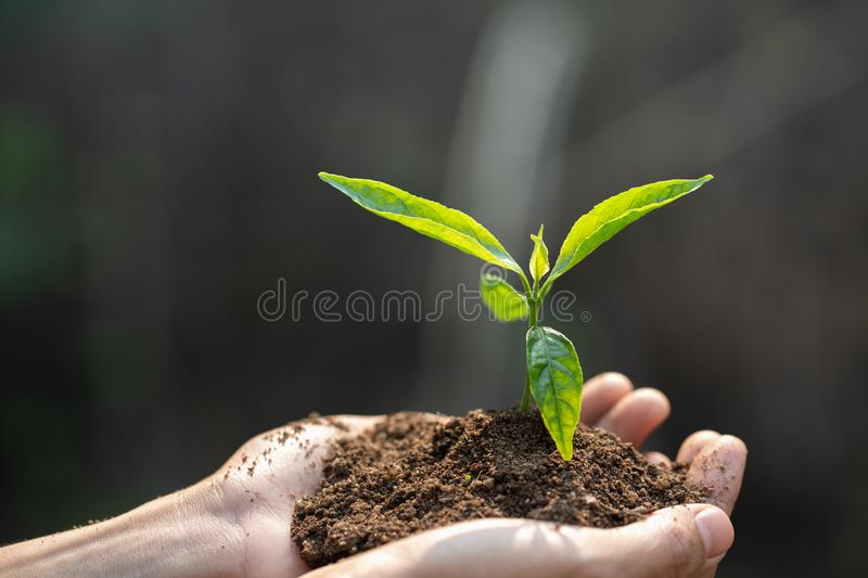 Human hands holding fertile soil and young tree, Planting trees to reduce global warming, environment Earth Day, Forest stock photos