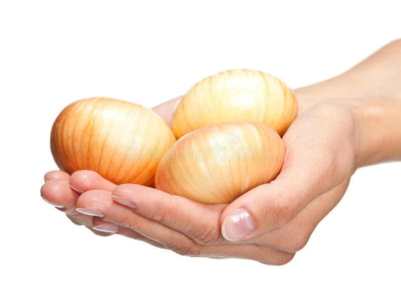 human-hands-holding-fresh-onion-27002608