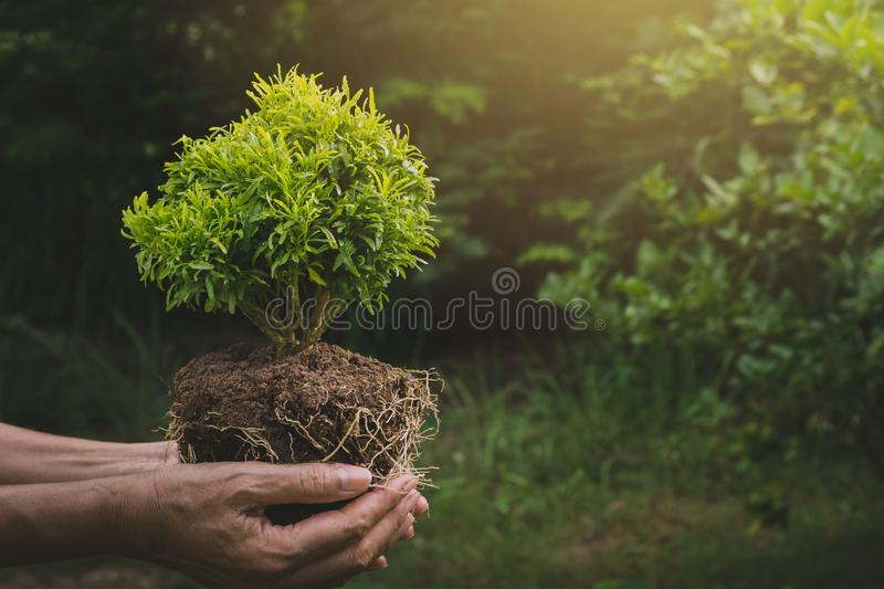 Human hands holding green small plant life concept. Ecology concept. royalty free stock photos