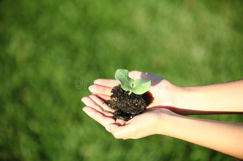 Human hands holding green small plant new life concept. Copy-space royalty free stock photos