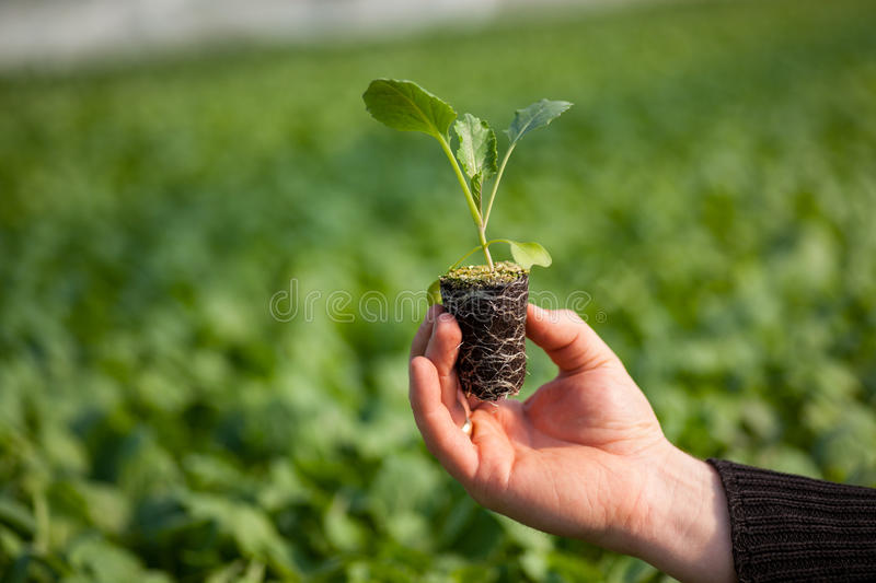 Human hands holding young plant with soil over blurred nature background. Ecology World Environment Day CSR Seedling Go royalty free stock photo